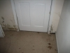 Mold by basement door